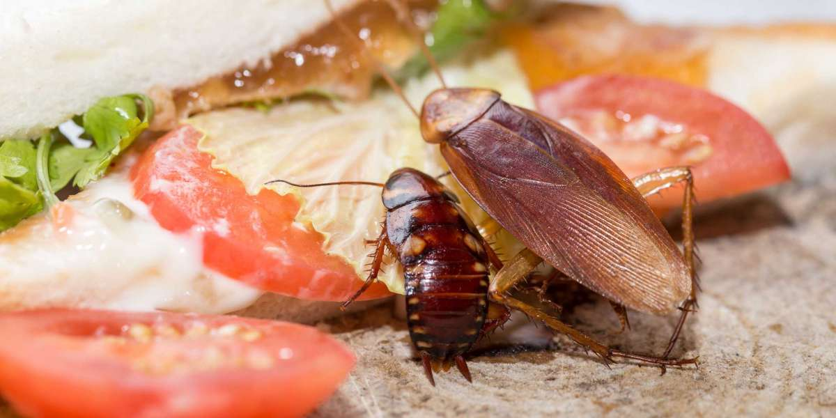 How Much Does Cockroaches Control Costs?